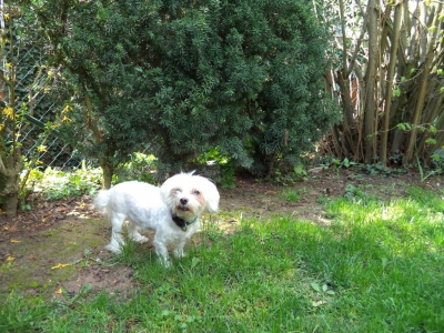 Hundepensionaufenthalt, Hundepension Jessy