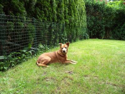 Hundepensionaufenthalt