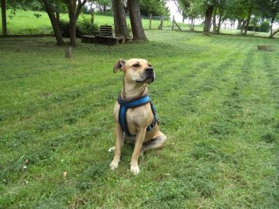 Hundepensionaufenthalt, Hundepension Jessy, Lola