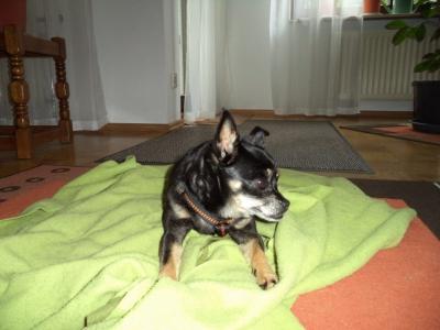 Hundepensionaufenthalt, Hundepension Jessy, Leila