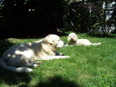 Hundepensionaufenthalt, Hundepension Jessy, Finley, Paula