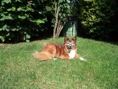Hundepensionaufenthalt, Hundepension Jessy, Candy