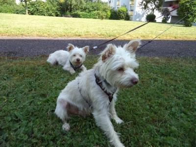 Hundepensionaufenthalt, Hundepension Jessy, Samy, Rocky