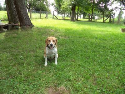Hundepensionaufenthalt, Hundepension Jessy, Baya