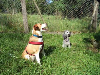 Hundepensionaufenthalt, Hundepension Jessy, Sofia, Amy