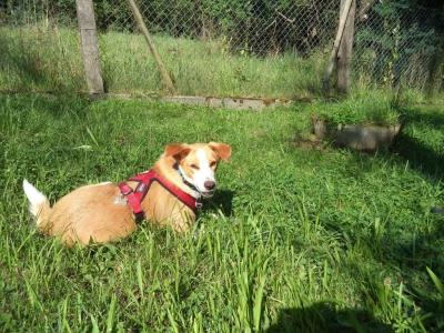 Hundepensionaufenthalt, Hundepension Jessy, Amy