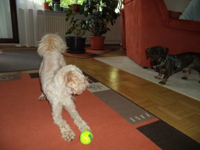 Hundepensionaufenthalt, Hundepension Jessy, Tony, Benno