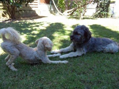 Hundepensionaufenthalt, Hundepension Jessy, Charly